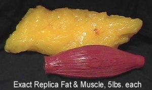 fat-v-muscle